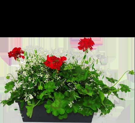 Mélange plantes