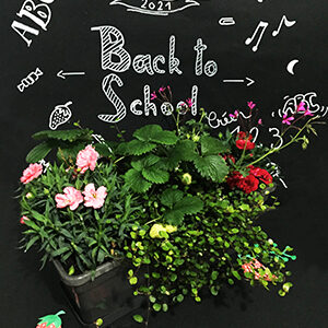 Collection Back to school
